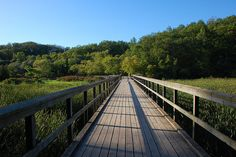 Grindstone creek boardwalk  Hamilton, Ontario