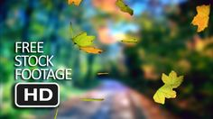 Free Stock Video Footage - Falling Green Leaf (Tree Background) HD Free Stock Footage, Free Stock Video, Backgrounds Free, Video Footage, Green Leaves