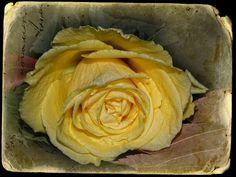 Yellow by vess_ta