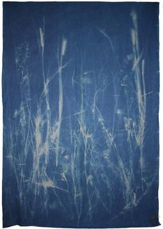 Botanical Blueprint Panel 1 200x150cm John Herschel, Printing Process, Indigo, Taupe, Natural, Beige, Indigo Dye, Nature, Au Natural