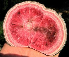 Excellent Patterned Rhodochrosite 4.5 inch across Polished both sides to glass. For sale. www.etsy.com/shop/GoldenHourMinerals