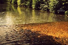 http://reflectofalook.blogspot.ch/2012/09/journeys-in-leeds-castle-voyage-leeds.html