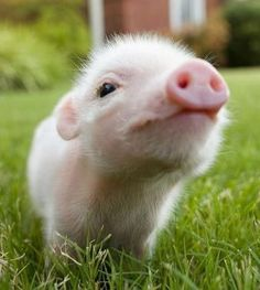 Pink and fuzzy piglet