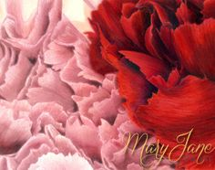 'Peonies' a Colored Pencil Drawing by MaryJane Sky of www.maryjanefineart.com