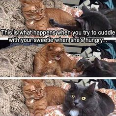 Animals are the best entertainment in the World, which make us laugh anytime, anywhere! Just look ridiculous animal picdump of the day 13 if you love funny animals. So ridiculous, funny and cute 35 funny animal pics! Funny Animal Memes, Animal Quotes, Cute Funny Animals, Funny Animal Pictures, Cat Memes, Funny Cute, Cute Cats, Funny Memes, Animal Humour