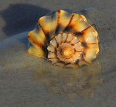 Lightening Welk from Smyrna Dunes Park | Flickr