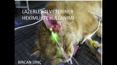 21st October 2014, My seminar about APPLICATION OF DIFFERENT LASER TYPES IN VETERINARY MEDICINE