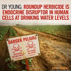 NEW STUDY: Roundup is an endocrine disruptor and is toxic to human cells in vitro (tested in culture dishes in the laboratory) at levels permitted in drinking water in Australia, a new study has found. http://www.gmoevidence.com/dr-young-roundup-herbicide-is-endocrine-disruptor-in-human-cells-at-drinking-water-levels/ #roundup #glyphosate #humanhealth