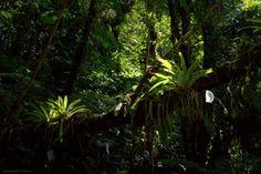 「samambaias na mata atlantica」の画像検索結果
