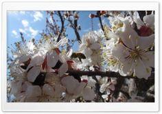 ZANBOOR.MR HD Wide Wallpaper for Widescreen