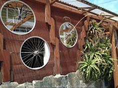 Bicycle wheel windows for a shed in San Francisco.
