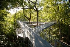 At the Morris Arboretum in Philadelphia, a network of suspension bridges and catwalks and observation platforms built among the trees enable you to see what's going on above the ground Landscape Elements, Green Landscape, Landscape Architecture, Landscape Design, Architecture Design, Deck Design, Garden Design, Morris Arboretum, Pole House