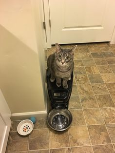 Bought Ziggy an automatic feeder so he would stop begging me for food. Now he just begs the machine for food.   http://ift.tt/1PLpyug via /r/cats http://ift.tt/1KvivXV  cats funny pictures
