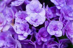 """prettylittleflower: """" _IGP3999 by natsuki90 on Flickr. """""""