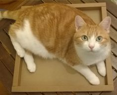 Avant de monter le reste de la cabane chat, il faut bien tester le fond Animals, Cabins, Animales, Animaux, Animal, Animais