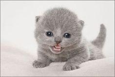 灰色の子猫だにゃ