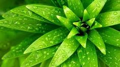 Bildergebnis für green