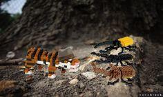 l'inspecteur tigre et les sacrabées - Quel scarabée glouton a dévoré la forêt d'épicéa? #tigre #tiger #animal #figurine #jouet #toys #block #scarabée #insecte