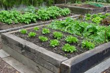 Raised beds allow soil to warm up quicker - a handy boost for your early spring planting regime.  Wood will do the trick, too, but don't use tanalised timber which will leach poisons into the soil. Macrocarpa will last longer than pine.