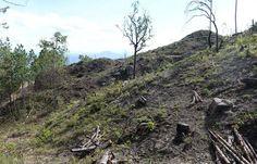 Suelos de Nicaragua son para tener bosque