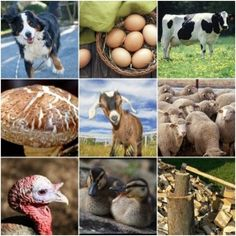 30 Ways To Earn Extra Money From Your Homestead Earn money doing what you love. Off Grid Homestead, Homestead Farm, Homestead Survival, Farm Business, Business Ideas, Future Farms, Living On The Road, Home On The Range, Farm Stand