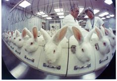 Rabbits are among the most abused animals on Earth—especially in labs. They are NOT experiments! #StopAnimalTests