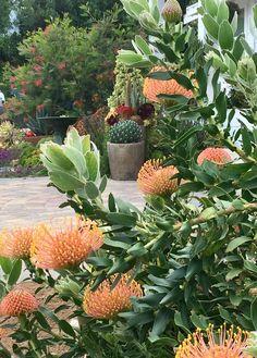 62 ideas farmhouse garden curb appeal for 2019 Australian Garden Design, Australian Native Garden, Australian Native Flowers, Australian Plants, Farmhouse Garden, Garden Cottage, Coastal Farmhouse, Succulents Garden, Planting Flowers