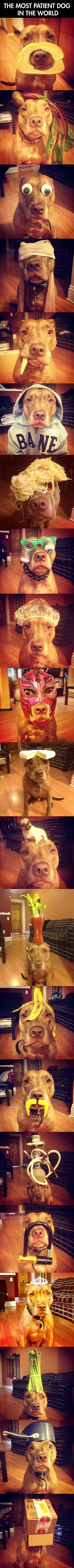 Meet The Most Patient Dog In The World – 23 Pics