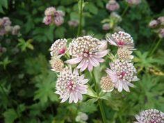 Die besten 25 zimmerpflanzen schattig ideen auf pinterest - Zimmerpflanzen sonniger standort ...