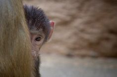 China Southern Airlines Bans Transport of Primates for Laboratory Testing!: http://onegr.pl/1jn4cGD