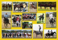 Keystone Stud Australian Stock Horses <3