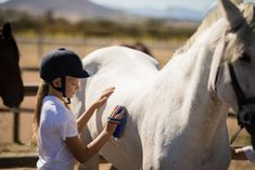 Girl grooming the horse in the ranch By Wavebreakmedia¡¯s photos , Horse Grooming, Grooming Kit, Team Building Exercises, Horse Saddles, Western Saddles, Body Brushing, Barrel Horse, Horse Tips, Brand Story