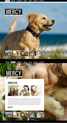 Animal Shelter Moto CMS Template #pet #website http://www.templatemonster.com/moto-cms-html-templates/43829.html?utm_source=pinterest&utm_medium=timeline&utm_campaign=ani