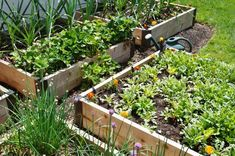 Think you need a huge yard to grow a productive edible garden? Learn the space-saving basics of square foot gardening here at Gardener's Path. Vertical Garden Diy, Vertical Gardens, Shaded Garden, Cedar Raised Garden Beds, Raised Beds, Raised Gardens, Container Gardening Vegetables, Vegetable Gardening, Square Foot Gardening