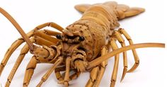 This isn't a lobster.