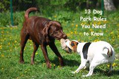 Labrador Retriever Dog Training - Why Its Vital to Understanding How Your Dog Thinks Labrador Retriever Dog, Labrador Puppies, Pet Dogs, Dogs And Puppies, Pets, Labrador Chocolate, Dog Information, Dog Park, Parks