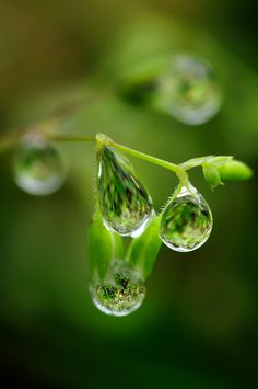 Dauwdruppels, reflection, beauty and photography, nature and flowers Dew Drops, Rain Drops, Drip Drop, In Natura, Fotografia Macro, Bokeh Photography, Micro Photography, Water Art, Water Droplets
