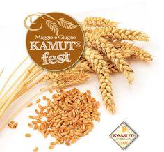 KAMUT® Fest! Let's celebrate KAMUT® khorasan wheat...