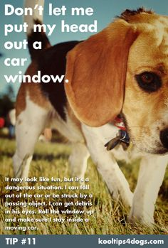 Don't let your dog put their head outside a moving car window.  www.koolcollar4dogs.com