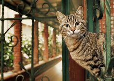 15 Lovely Pictures of Cats