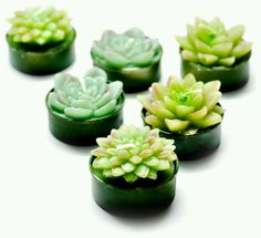 WOW...These r the COOLEST lil candles EVER...they're Mini Succulent candles...they come in a set of 6 tea light votives...they're made by LEIF!!!! <3