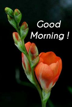 Happy Good Morning Images, Good Morning Clips, Good Morning Wishes Friends, Good Morning Happy Saturday, Good Morning Beautiful Pictures, Latest Good Morning Images, Good Morning Images Flowers, Good Morning Roses, Good Morning Beautiful Quotes