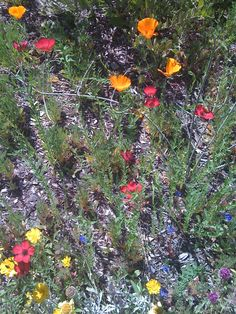 more desert wildflowers