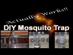 A Homemade Mosquito Trap (That Really Works!)