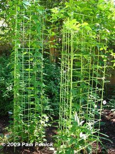 97 best Tomato cage images on Pinterest | Tomato cage, Tomato cages Tomato Garden Design Triangular Html on
