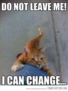 Funny Cat Memes That Will Make You Laugh Out Loud. From Keyboard Cat to Grumpy Cat, we rounded up some of our favorite feline memes and took a look at their rise to internet fame. Funny Animal Memes, Animal Quotes, Funny Animal Pictures, Cute Funny Animals, Funny Cute, Cute Cats, Funny Memes, Funny Sayings, Humorous Pictures