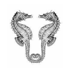 Resultado de imagen para figuras o siluetas de hipocampos