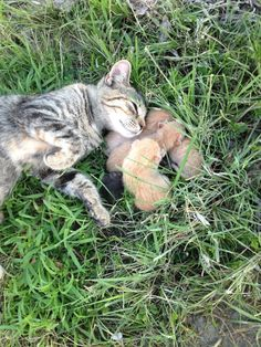 Our farm cat gave us some presents this morning! - Imgur