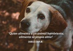 Estas sabias frases dedicadas a los perros, demuestran lo maravillosos que son