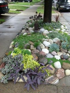 Rock garden-awesome idea for those of us who hate grass!